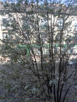 Eladó lakás 1142 Budapest Erzsébet királyné útja 30m2 22,9M Ft Ingatlan kép: 30