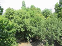 office For sale 1146 Budapest Abonyi utca 194sqm 199M HUF Property image: 21