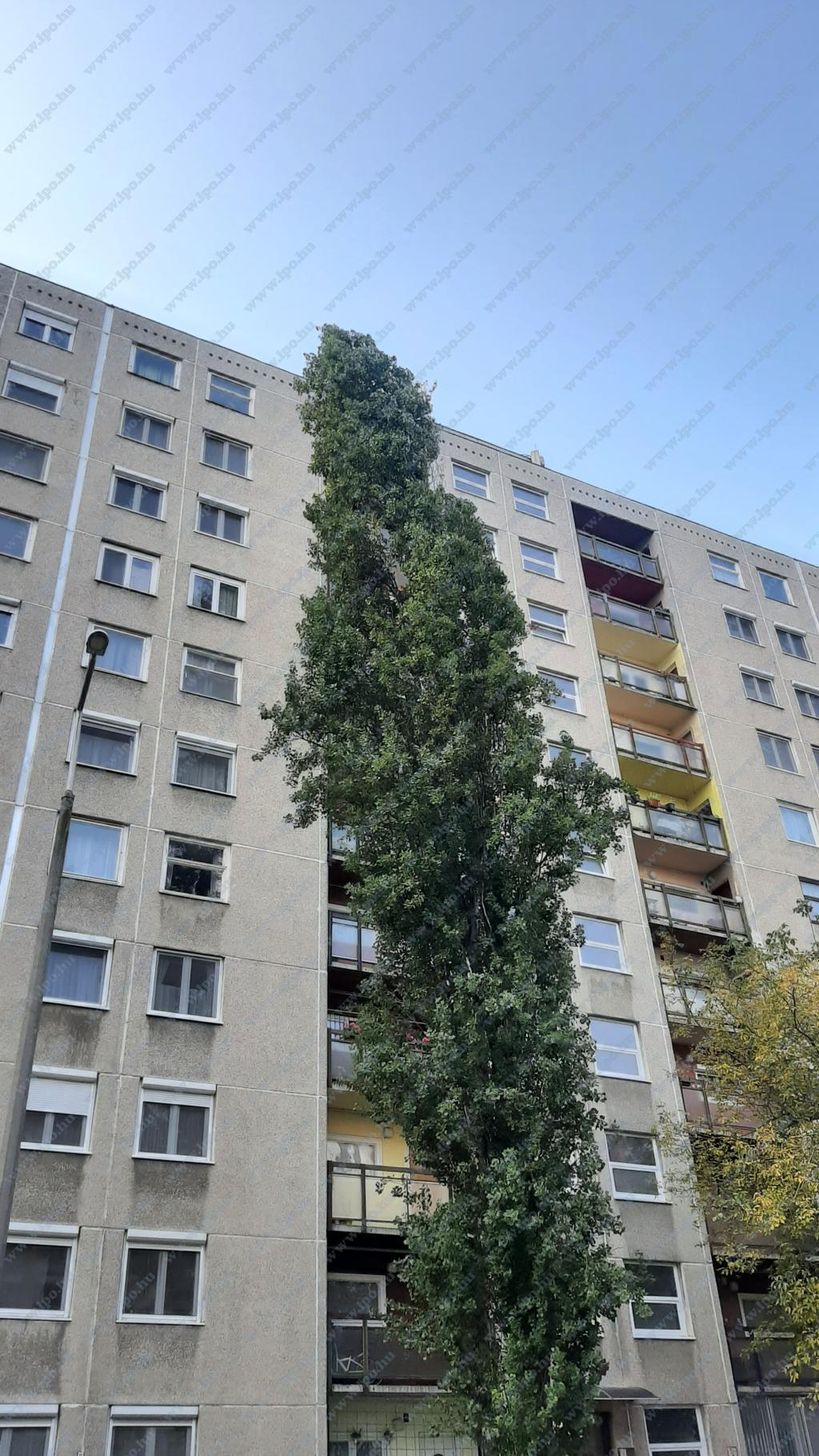 flat For sale 1139 Budapest Petneházy utca 49sqm 34,9M HUF Property image: 1